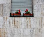 Faccia di fiore - Milano (2018)